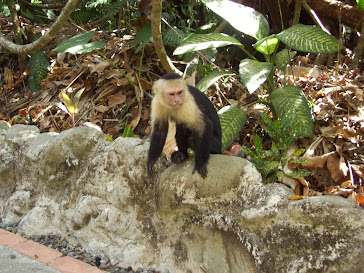 Monkey I fought for breakfast-