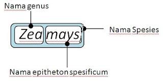 Contoh Binomial Nomenklatur