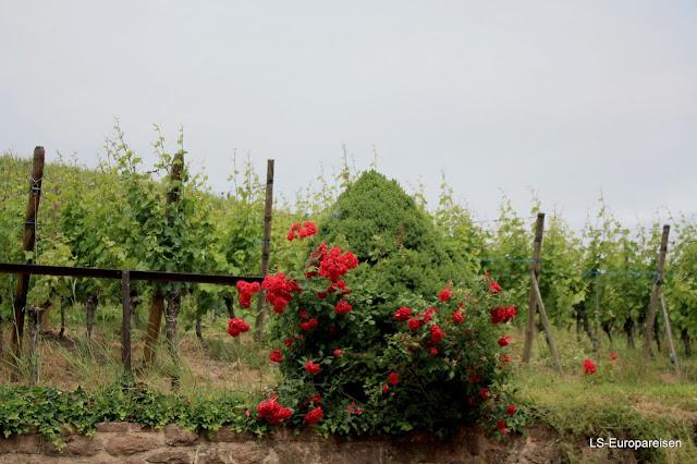 дорога вин Эльзаса, вино, кухня, гастрономия, что посмотреть, куда поехать, рислинг, мускат,Эльзас, Франция