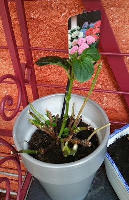 plante-petite-pousse
