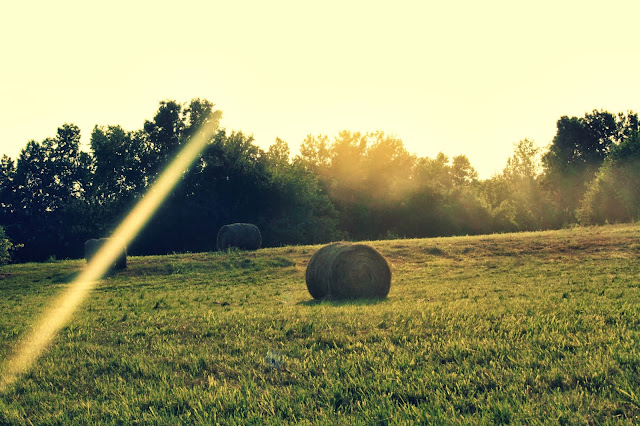 Looking Back - a field with rolls of hay at sunset | RosevineCottageGirls.com
