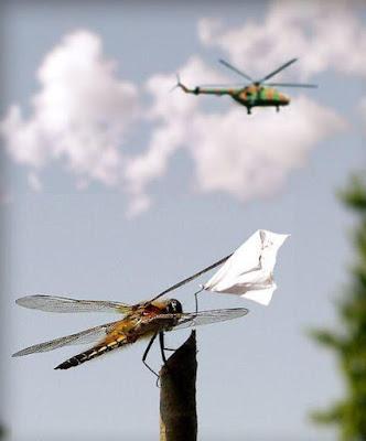dragonfly saying goodbye