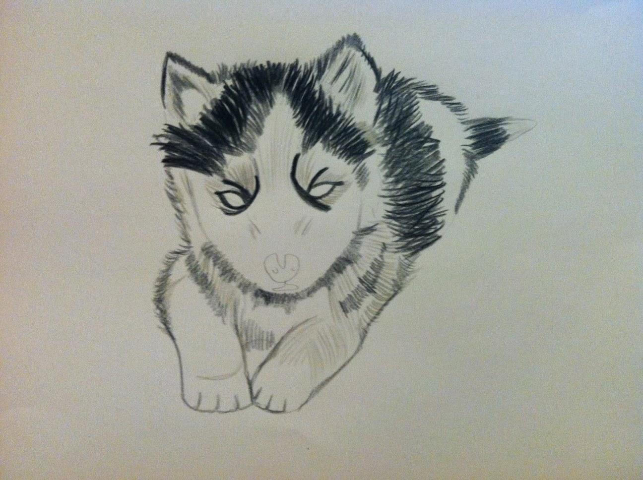 Cute Husky Puppy Drawings Drawing a husky really made meCute Husky Puppy Drawings
