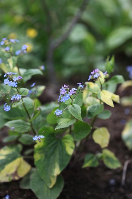 blomster plantens hoveddeler