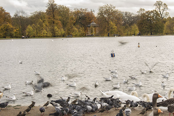 Hyde Park, London, fall, blog, post, photos, photography, park,