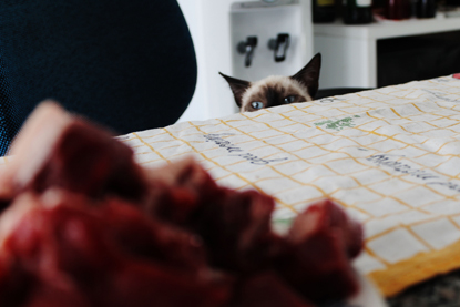 brown cat looking over table at plate of meat