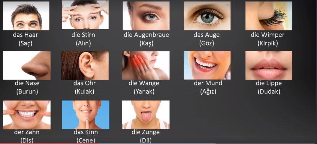 Almanca Vücudun bölümleri yüz