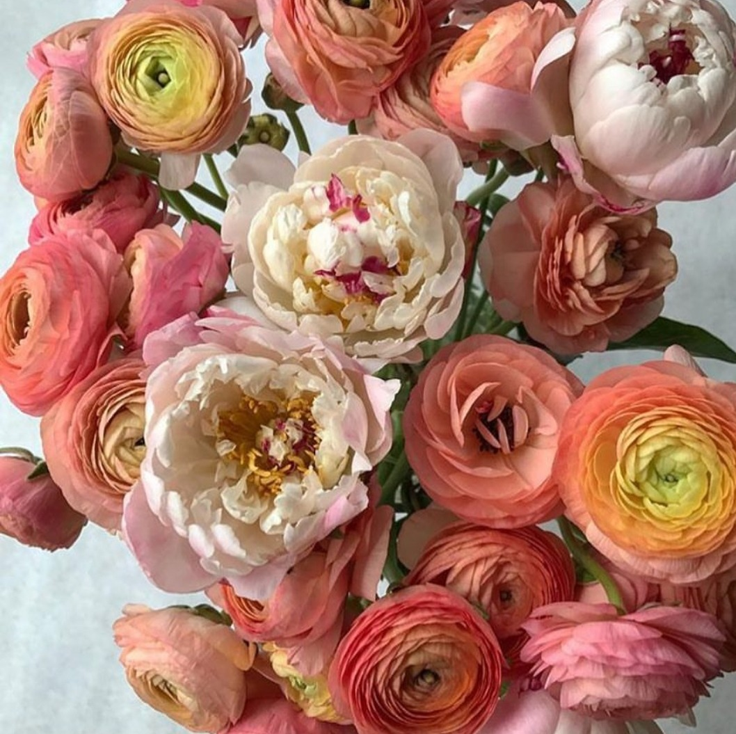All The Pretty Flowers April 27 2018 Zsazsa Bellagio Like No Other