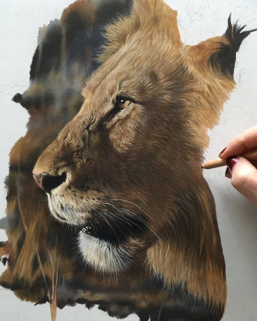 01-Lion-WIP-Julie-Rhodes-Color-Pencil-Wild-Animal-Drawings-www-designstack-co