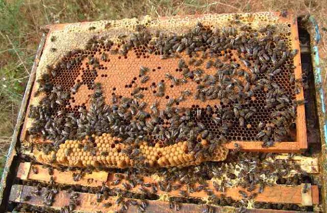 Μυστικά για παρατεταμένη ανάπτυξη το καλοκαίρι σε όλα τα μελισσια