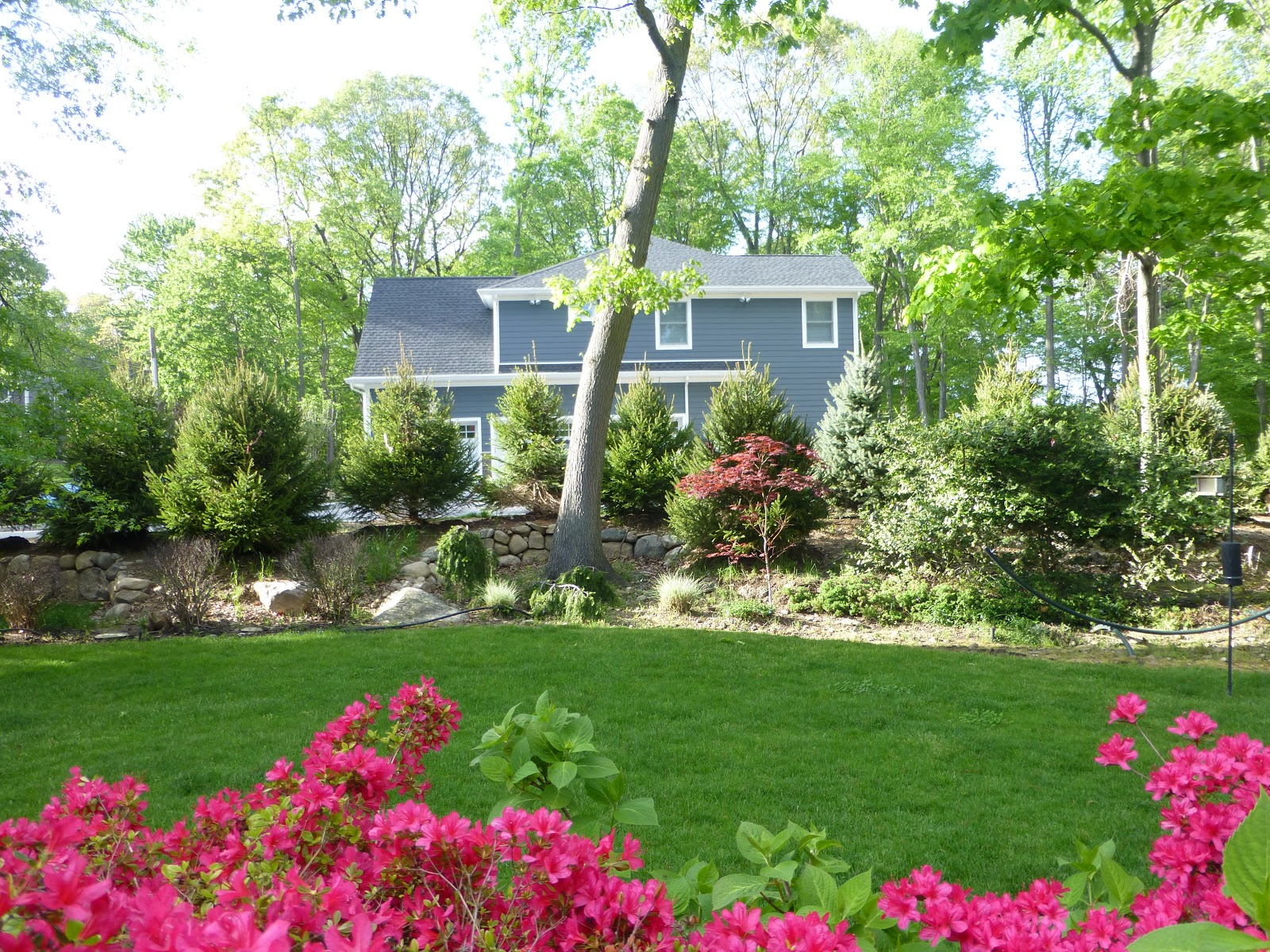 Ms. Toody Goo Shoes: Around My House: Backyard Landscaping on Backyard Landscaping Near Me id=35235