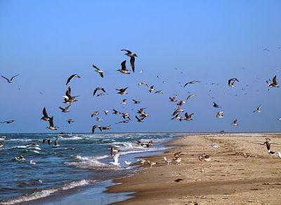 Gaviotas volando, otras en la arena y algunas en el mar