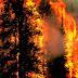 Mengapa polisi menghentikan penyidikan kasus pembakaran hutan?