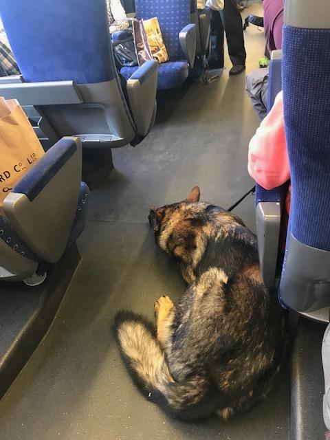スイスの列車の中にいた犬はかわいかった