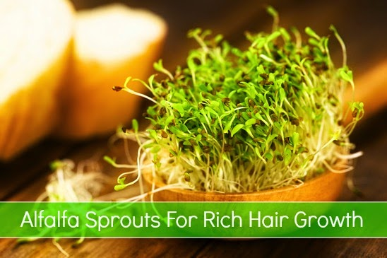 Alfalfa Sprouts For Rich Hair Growth