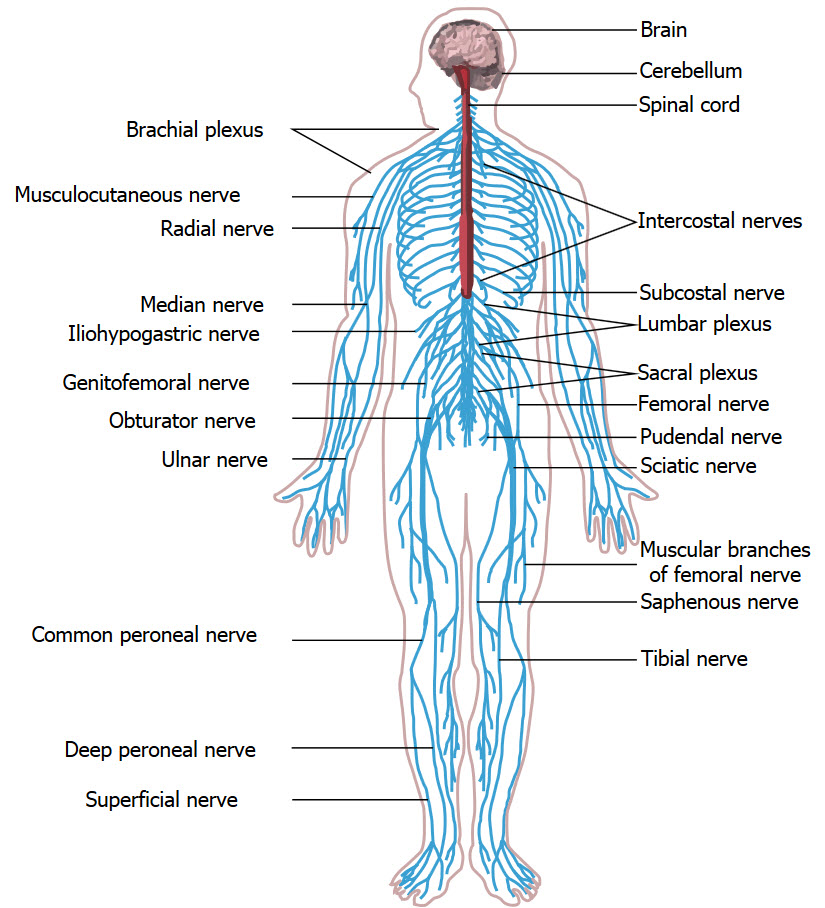 tensor fascia lata tendonitis icd 10