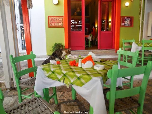 kot w greckiej tawernie, kot wspina się na stół, grecki kot wyjada ze stołu