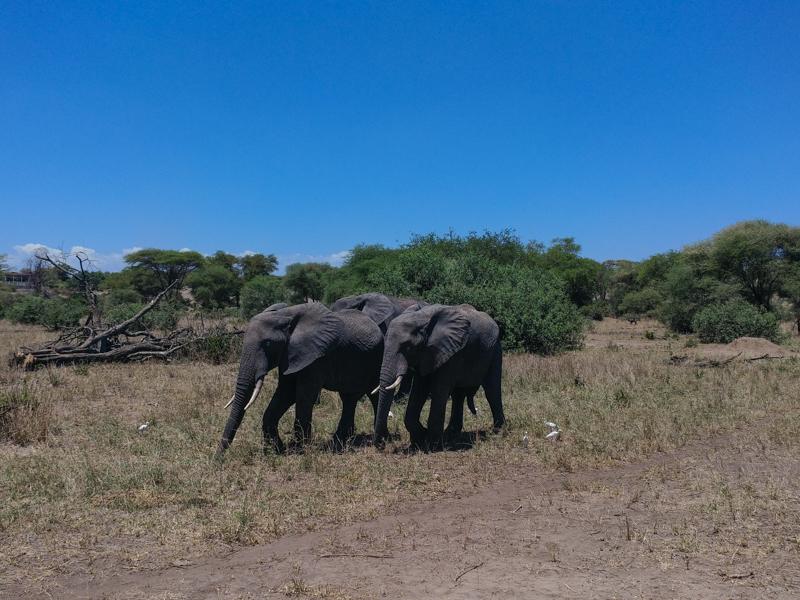 محمية ترانجيري في تنزانيا