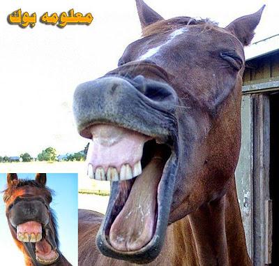 حيوانات تضحك مثل البشر