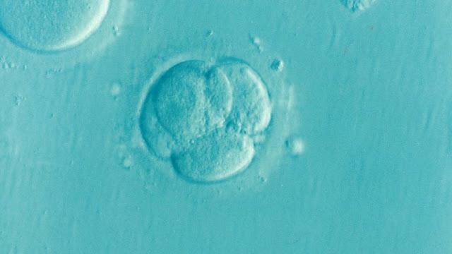 Embryo, Ivf, Icsi, Unfruchtbarkeit, Fruchtbarkeit