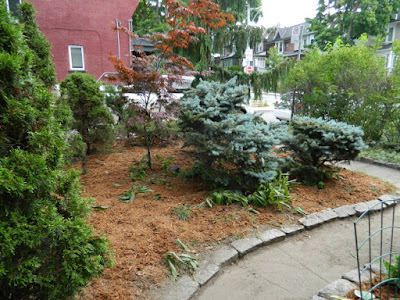 Leslieville Toronto front garden summer clean up after by Paul Jung Gardening Services