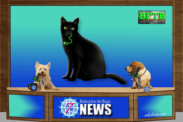 BFTB NETWoof News report on cat eating snake