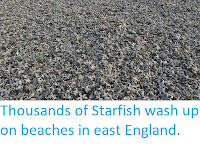 http://sciencythoughts.blogspot.co.uk/2018/03/thousands-of-starfish-wash-up-on.html