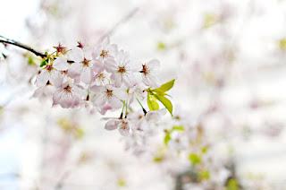 Une branche fleurie
