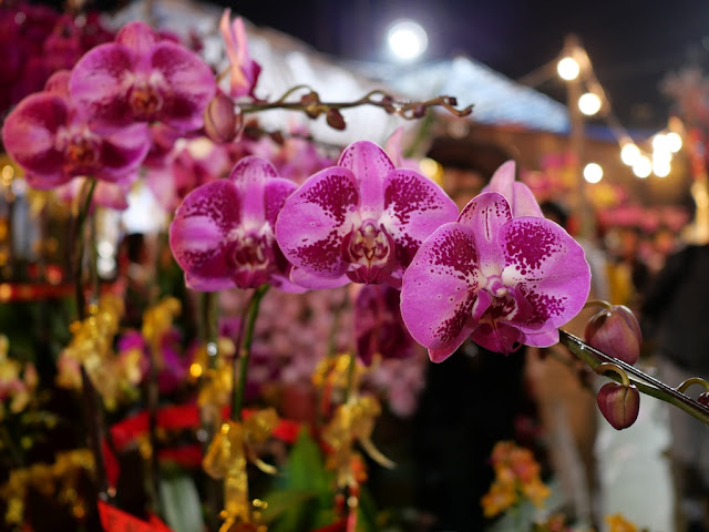 flowers for sale at the Victoria Park Lunar New Year Fair