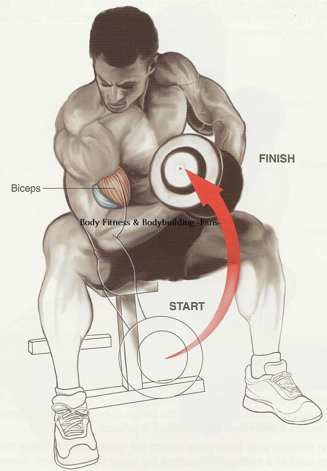 Images of Workout Exercises For Biceps