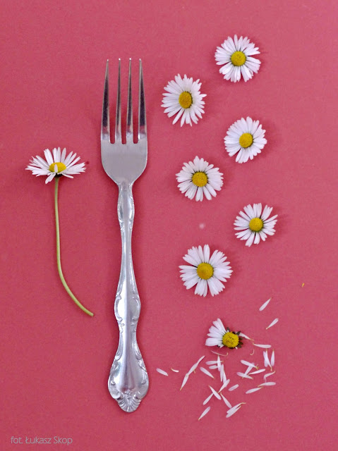 jadalne kwiaty stokrotek