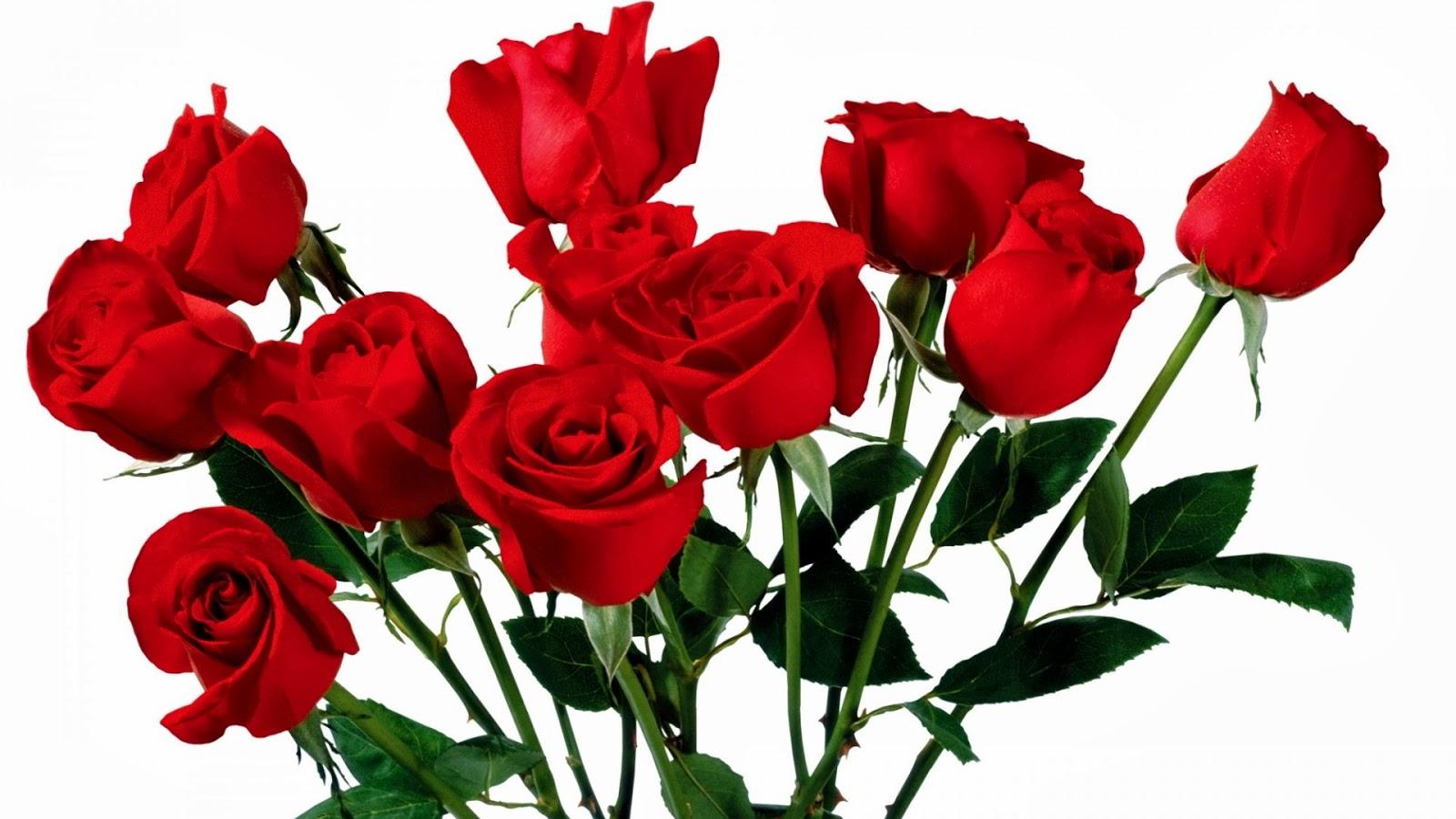 Fakta Fakta Unik Dan Menarik Tentang Bunga Mawar SEGALA FAKTA