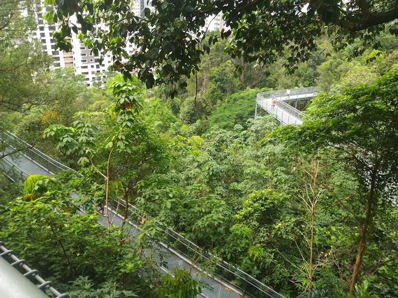 叢林小徑,高架鐵橋