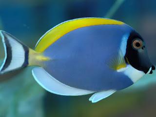 10 curiosit sui pesci for Immagini di pesci disegnati