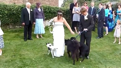 Fail Army Dog Wedding Dress Urination