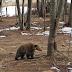 Ξύπνησαν οι αρκούδες στο Καταφύγιο και μας φέρνουν την άνοιξη (vid)