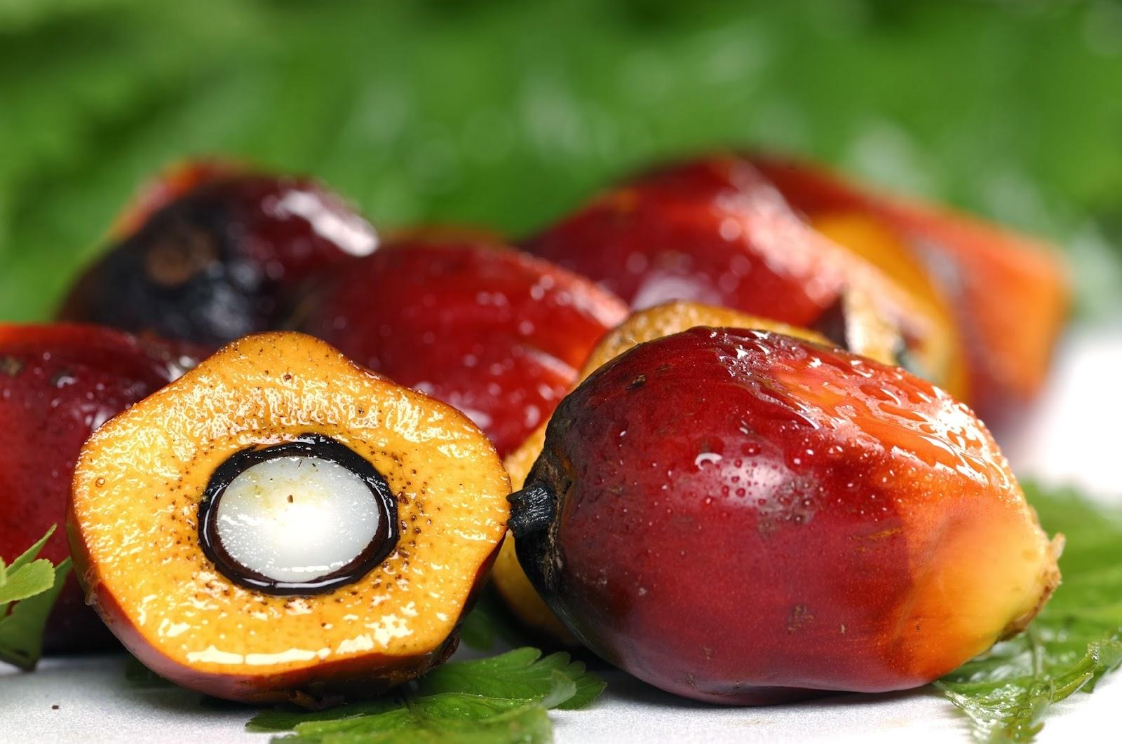 Odżywianie Od Kuchni Olej Palmowy