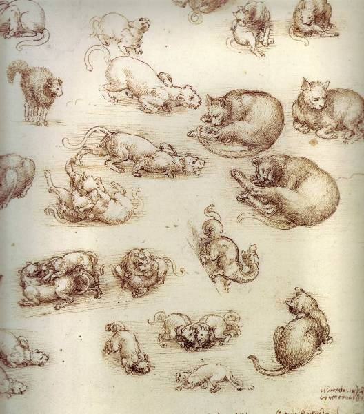 Cats and Other Animals