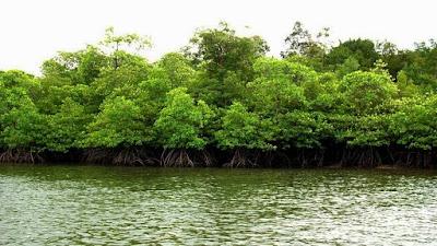 Hutan Mangrove Taman Nasional Way Kambas