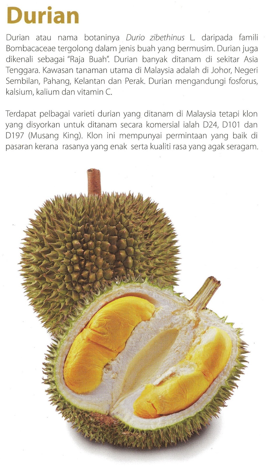 Durian Info: Durian Marketing in Malaysia and FAMA