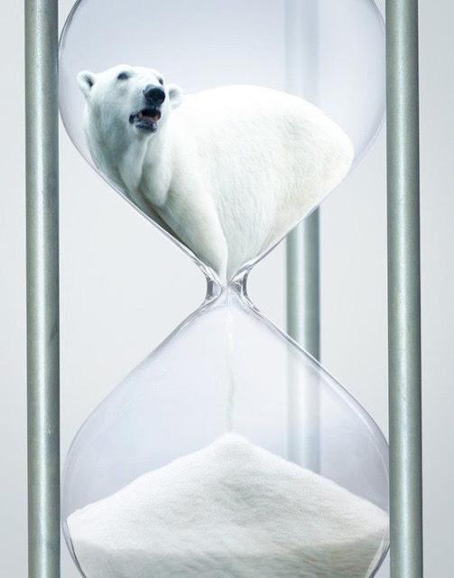 Green Pear Diaries, publicidad, publicidad incómoda, oso polar