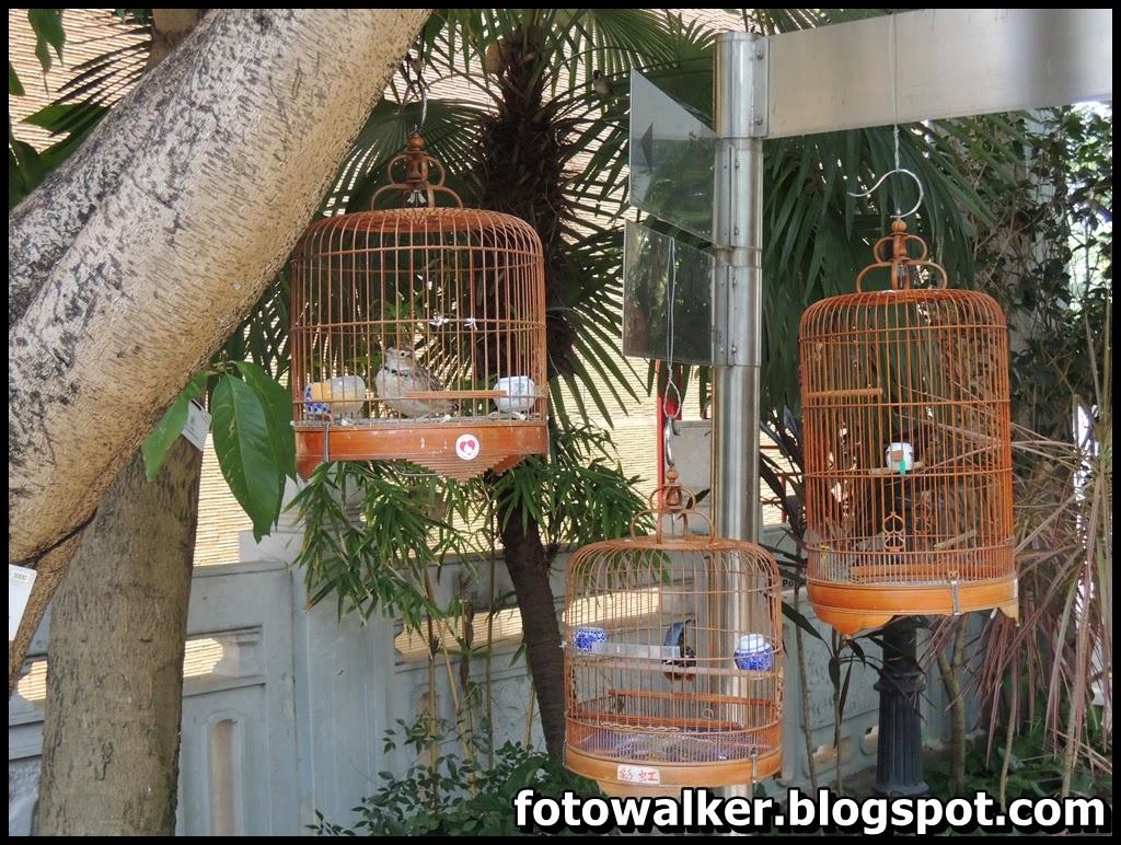 Foto Walker: 園圃街雀鳥花園 Bird Garden