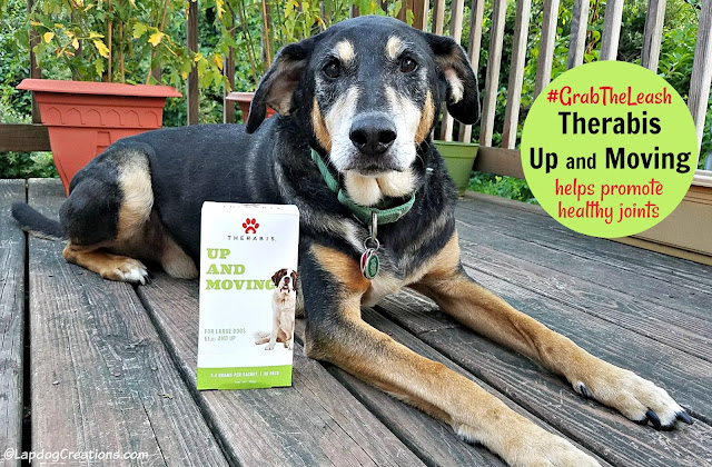 senior rescue dog therabis joint mobility cannabinoid