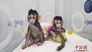 clone macaques