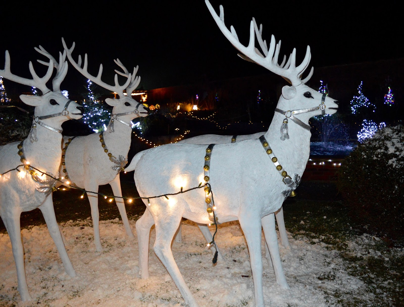 Winter Wonderland Christmas Light Show | A Wynyard Hall Garden Event - A Review - Ice Queen Reindeer