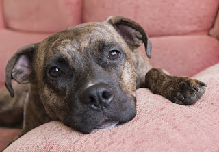 Eight tips to help fearful dogs feel safe