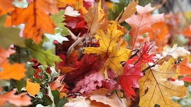 Paseando por el otoño