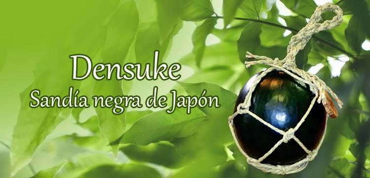 Sandía negra de japón densuke