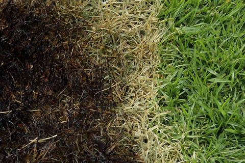 Photography S Art Burnt Grass