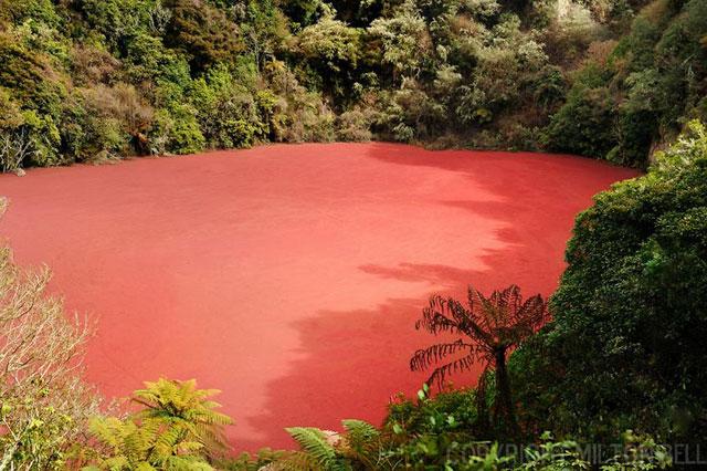 Danau Merah Rimba